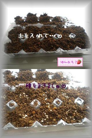 ちこちゃんの観察2012★2★上手くできるかな??-2