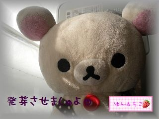 ちこちゃんの観察2012★2★上手くできるかな??-6