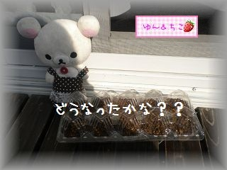 ちこちゃんの観察日記2012★3★謎の野菜の観察-2