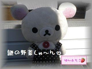 ちこちゃんの観察日記2012★5★謎の野菜その2-1