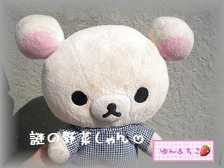 ちこちゃんの観察日記2012★7★謎の野菜★3★-1