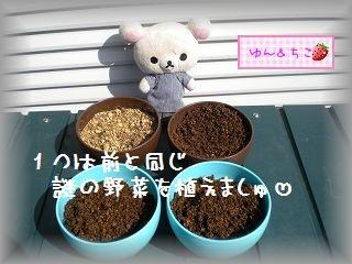 ちこちゃんの観察日記2012★7★謎の野菜★3★-4