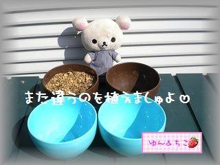 ちこちゃんの観察日記2012★7★謎の野菜★3★-3