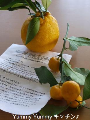 橘と三宝柑♪