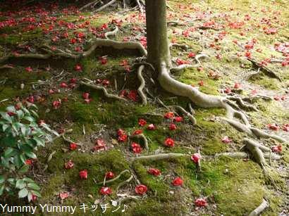 椿のじゅうたん☆