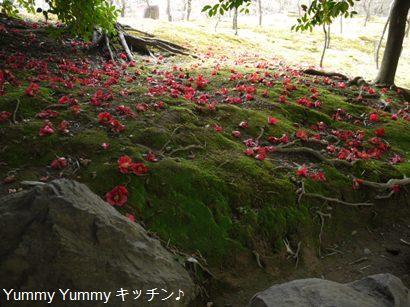 椿のじゅうたん♪