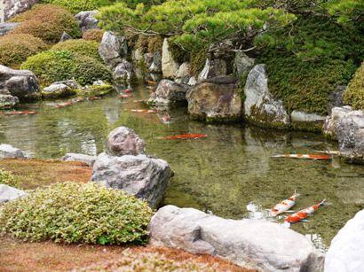 室町の庭(鯉)