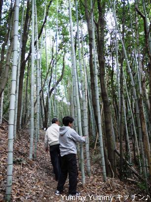 湯浅城跡竹林