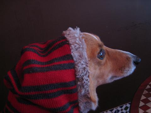 赤頭巾12.17