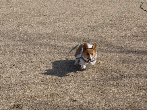 走る!!!1.4