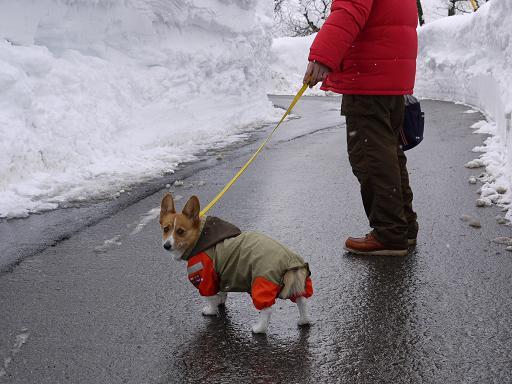 除雪されてる