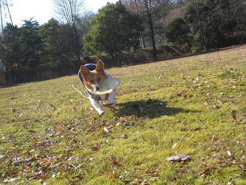 牧野ヶ池で走る1.17