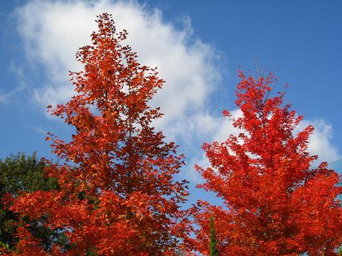 青空と紅葉11.26