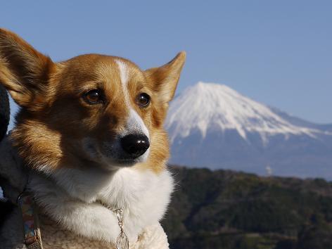 富士川SAで1.9