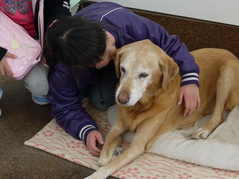 犬好きお嬢さん1.9
