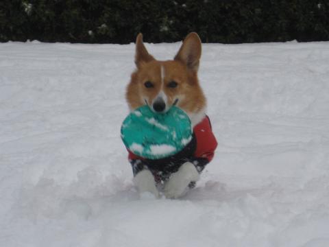 雪上フリ1.17