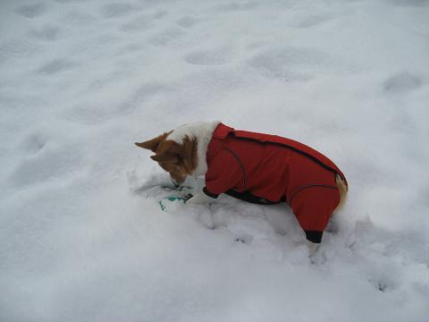 雪に埋もれたフリ1.17
