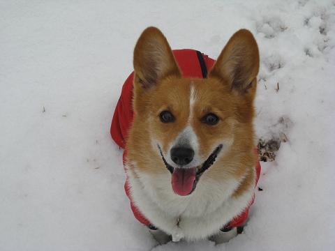 雪遊びで満足2.11