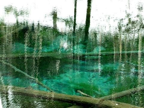 2011年GW神の子池11
