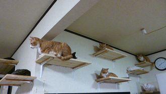 猫だな軍団