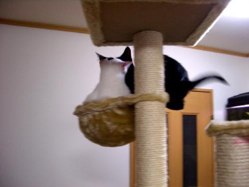 家猫 071