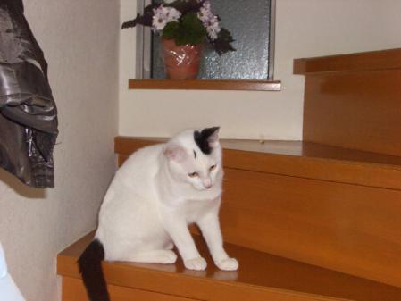 家猫 006