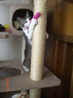 タワー遊び