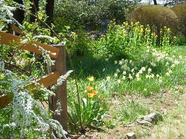 garden20110428mini03.jpg