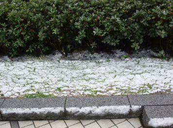 0307雪