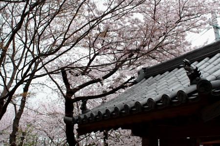 20080406_aj03.jpg