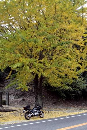 20091108_mg01.jpg