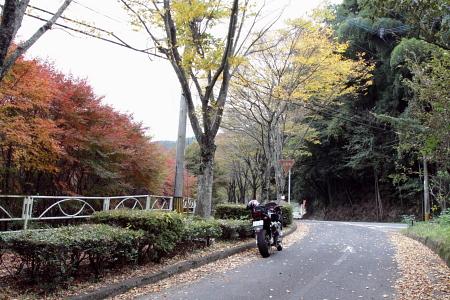 20091108_mg05.jpg