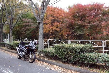 20091108_mg06.jpg