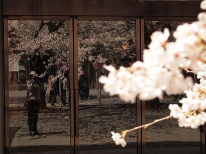 桜を撮る人 2