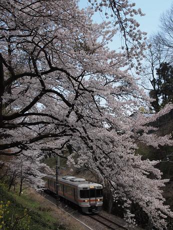 山北の桜と御殿場線 2