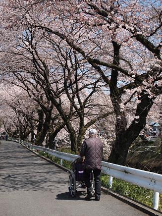 桜の下を散歩