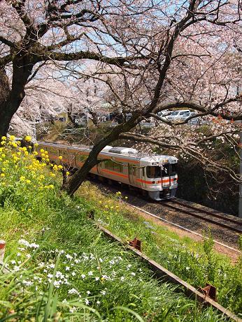 山北の桜と御殿場線 3