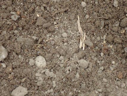 堆肥と土の混ぜたのをキエーロへ2