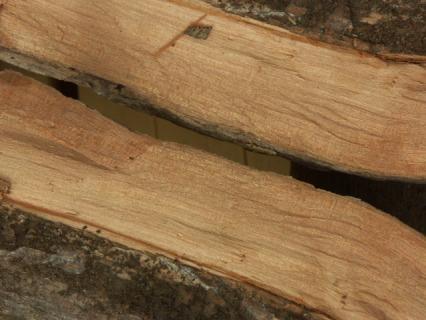 栗・桜の薪を割ってみる