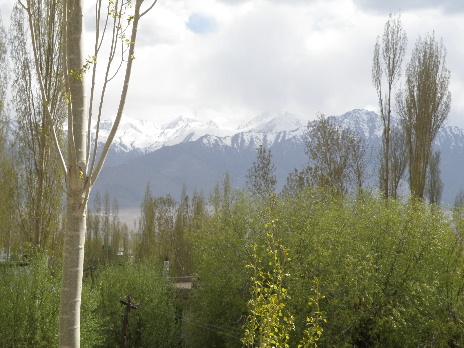 Chhali Villa3