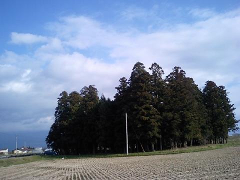 廣瀬神社2:鎮守の森