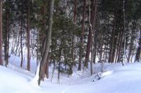 2010年2月13日 大東岳 一合目