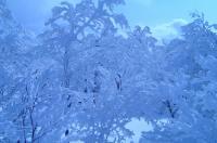 大東岳 山頂付近 樹氷