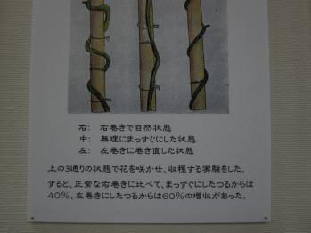 kihara_0009.jpg