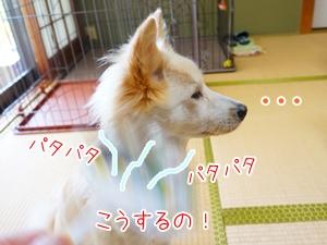 20130831_8.jpg