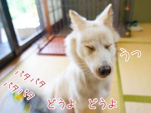 20130831_9.jpg