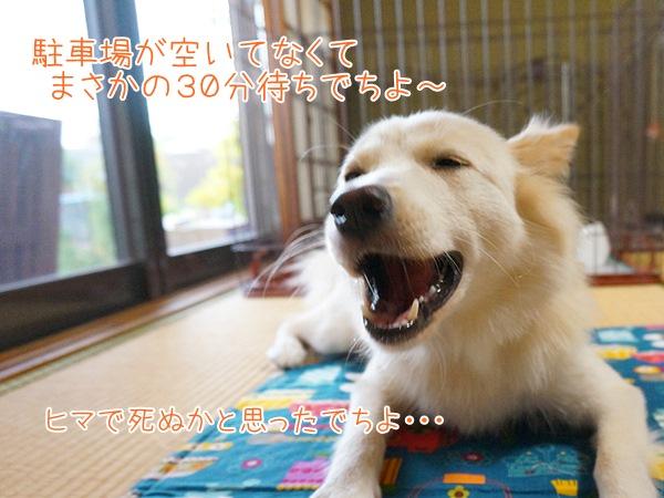 20130916_5.jpg