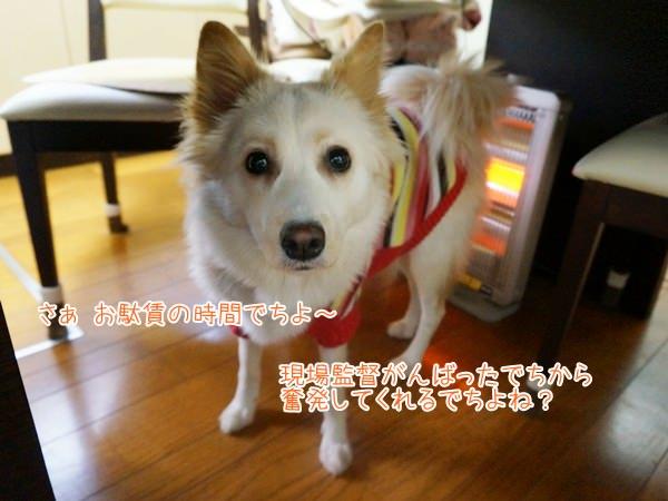 20131122_9.jpg