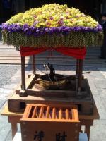 花祭り12