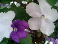 花のリレー2